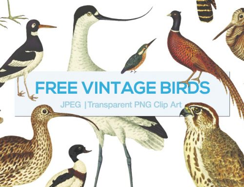 Free – Vintage Bird Clipart PNG Illustrations