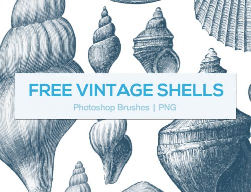 FREE – Vintage Shells – Photoshop Brushes and PNGs